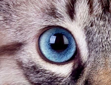 bg eye